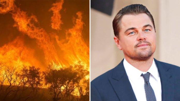 Amazzonia, DiCaprio dona 5 milioni di dollari