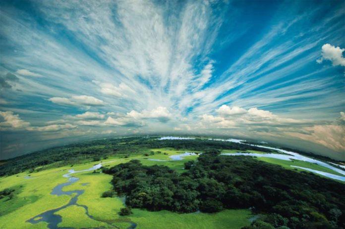 rapporto covid deforestazione