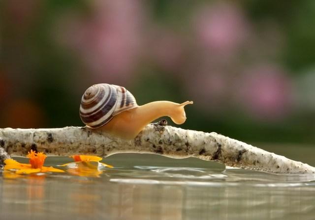 Animali molto lenti - Lumachina