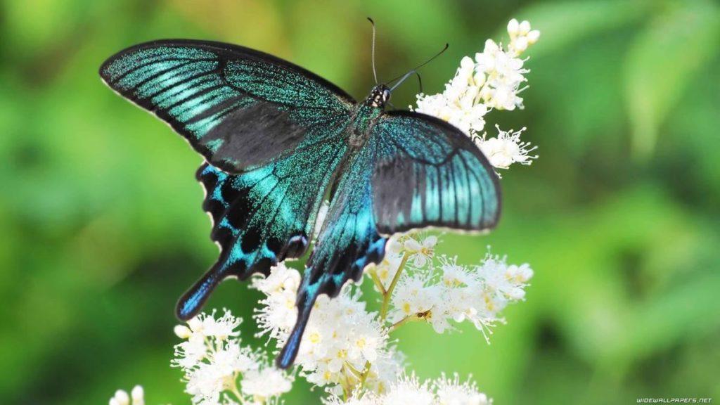 Farfalla_Animali molto lenti