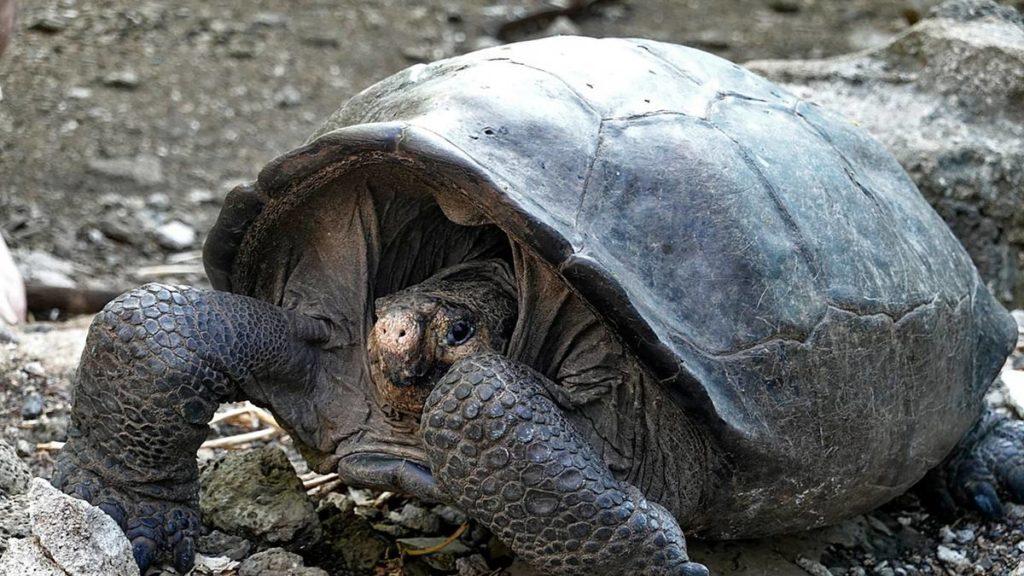 Tartaruga_Animali molto lenti