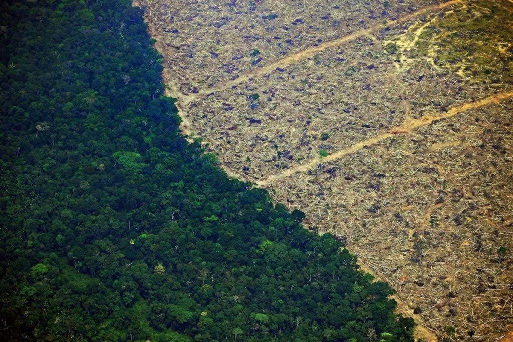 Amazzonia 2019 deforestazione