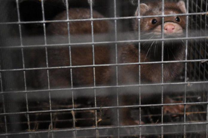 Divieto Allevamenti in Italia PETA