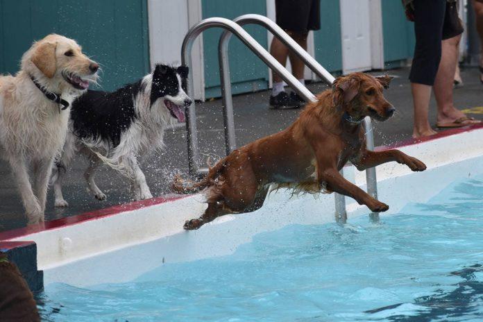 Foto Cani piscina