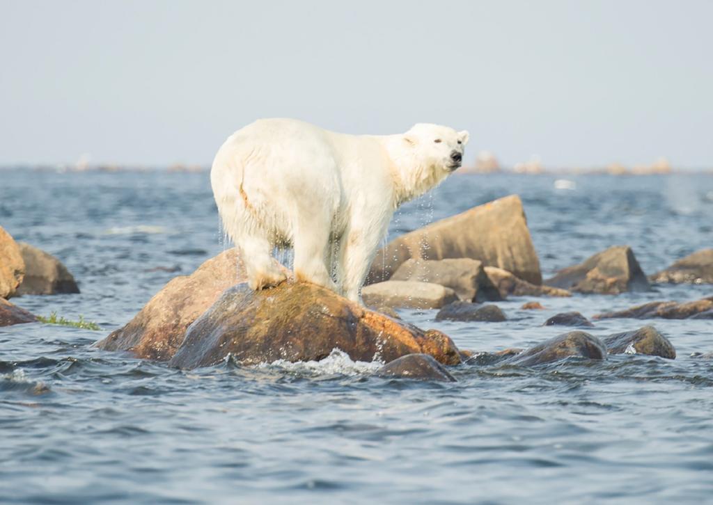 Cambiamento climatico, alterazione ecosistemi
