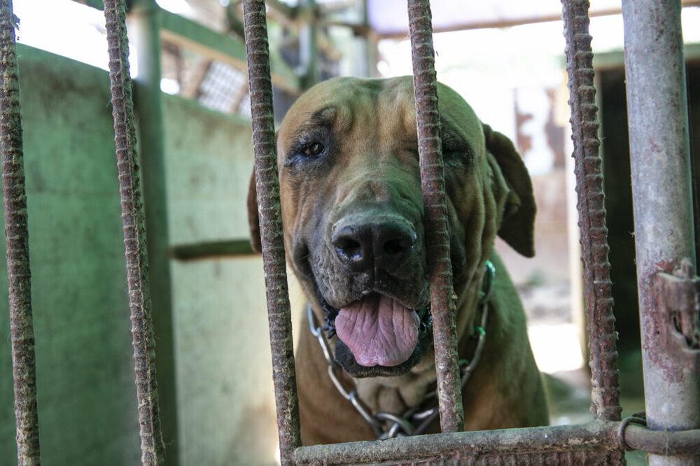 salvati 196 cani