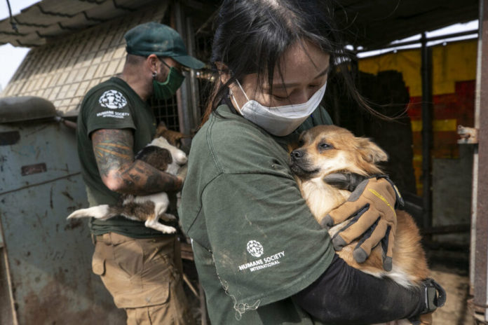 HSI salva 196 cani