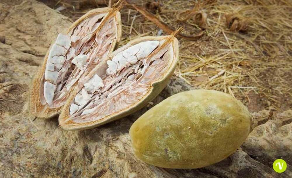 Polpa frutto baobab.