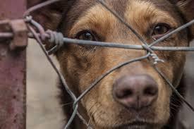 Violenza contro gli animali