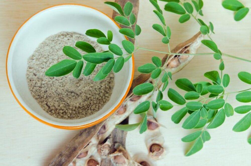 Costo pianta Moringa.