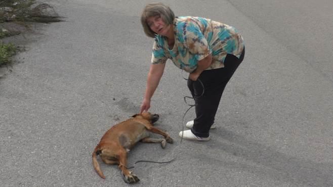 Violenza contro gli animali: che sia carcere.