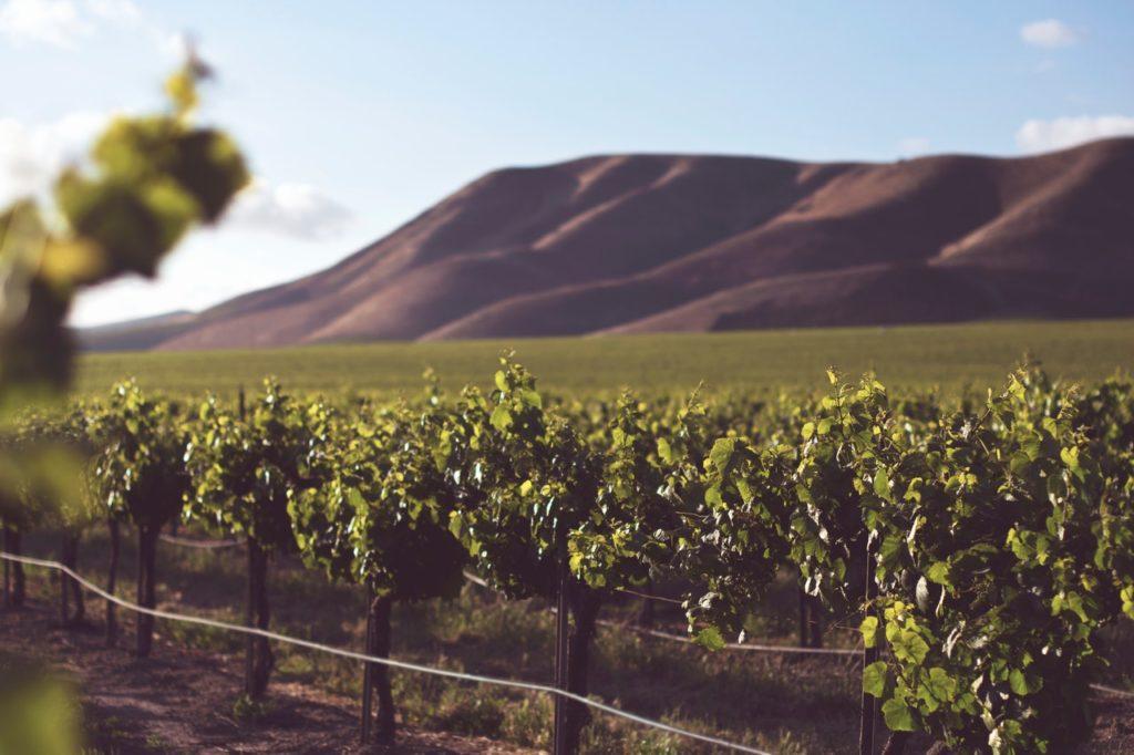 Strade del vino in Italia