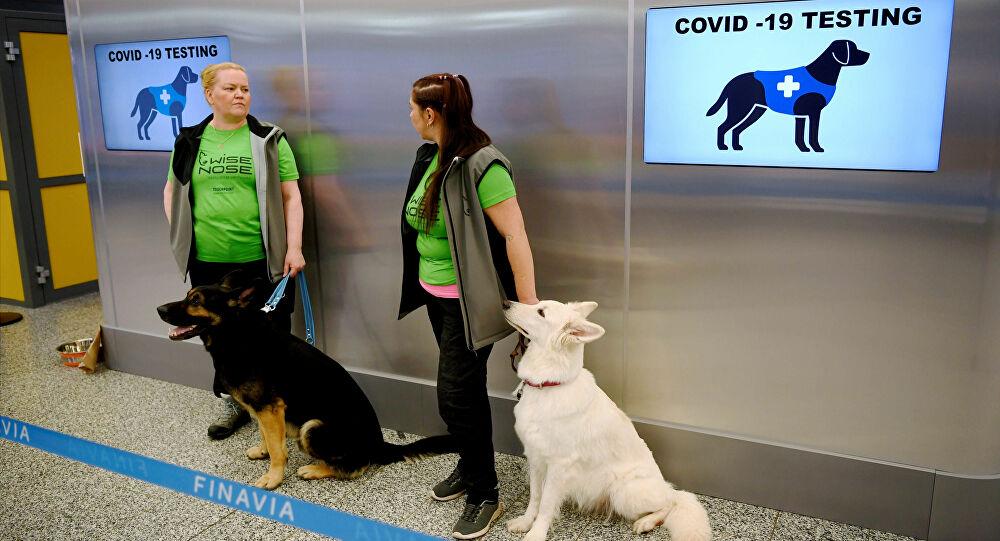 Cani anti-Covid Helsinki.