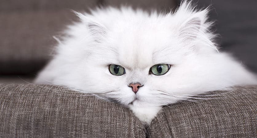 Festa del gatto, perché proprio oggi?