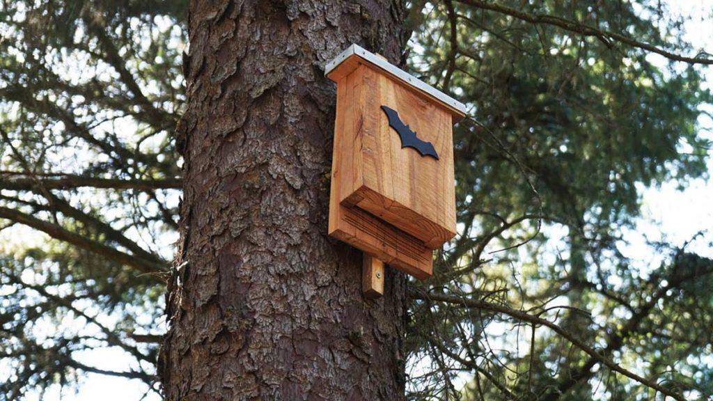bat box su un albero