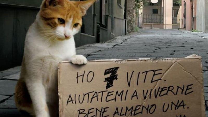 Adottare un gatto è un gesto di coraggio e d'amore.