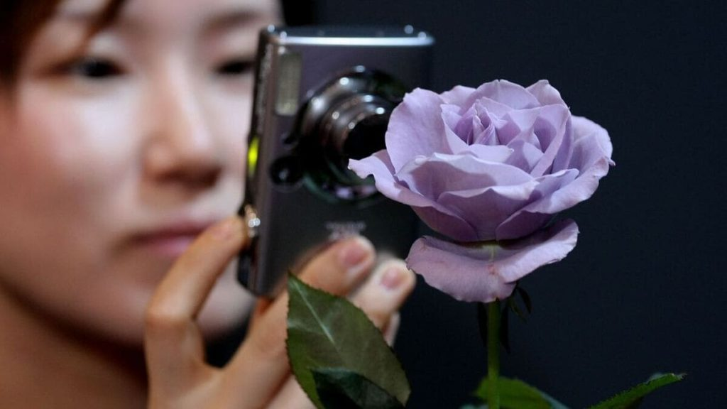 rosa blu_applause