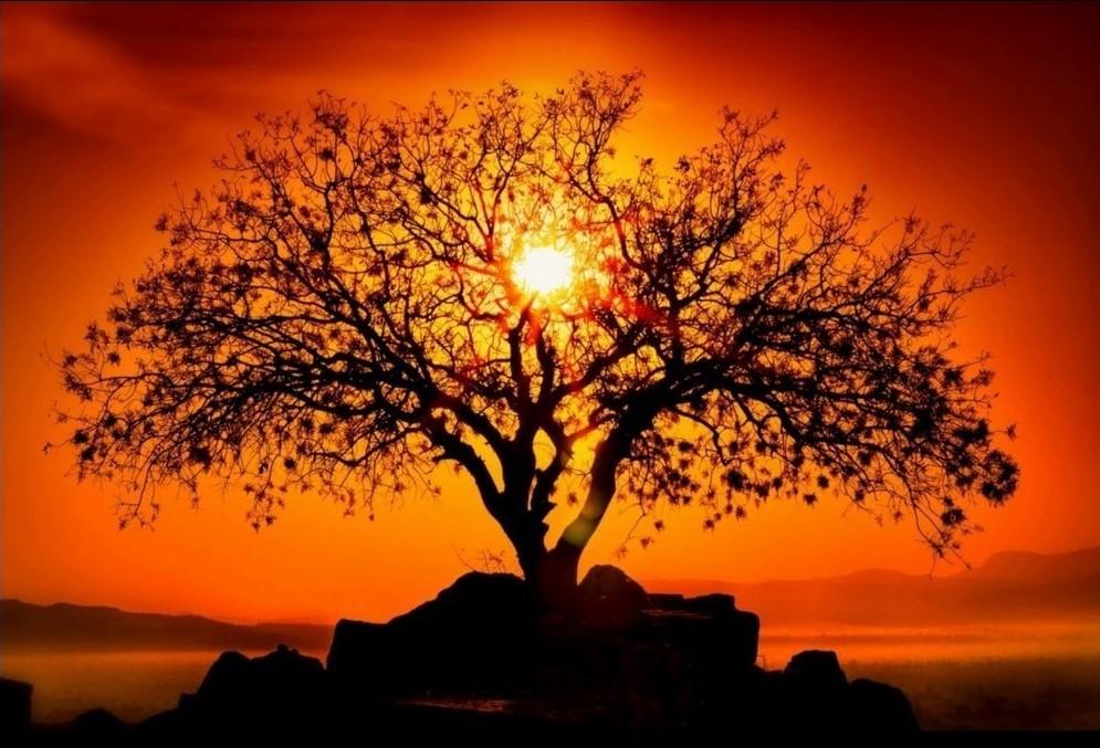 Albero della vita con tramonto