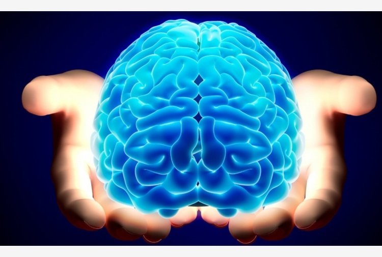 Cervello femminile, gli studi sull'invecchiamento cerebrale