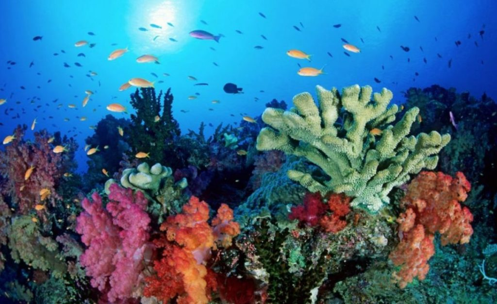 Giornata mondiale dell'ambiente_mare
