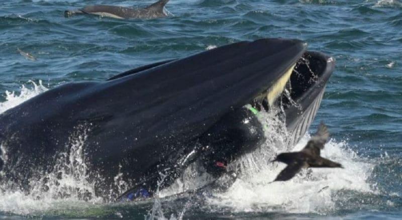 inghiottito da una balena_salvo
