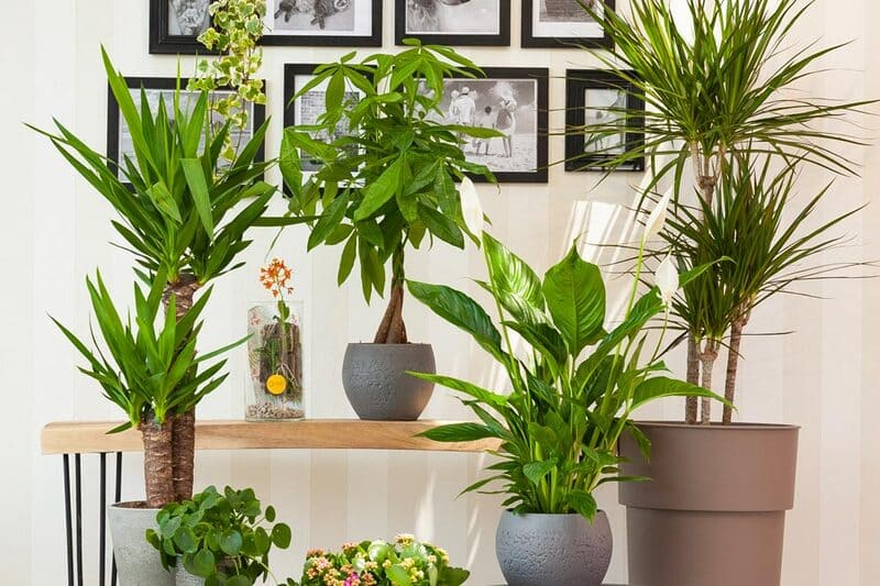piante da interno_verdi