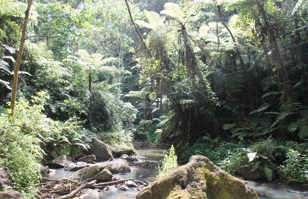 La foresta di Kiambu: la battaglia di Joannah Stutchbury