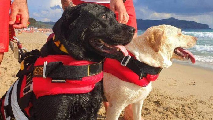 salvata da due cani bagnino