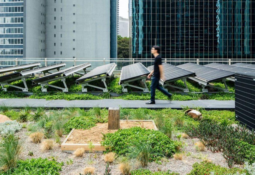 Sinergia tra piante e fotovoltaico
